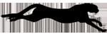نمای بدن یوزپلنگ