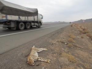 عکس از: اداره کل حفاظت محیط زیست استان سمنان