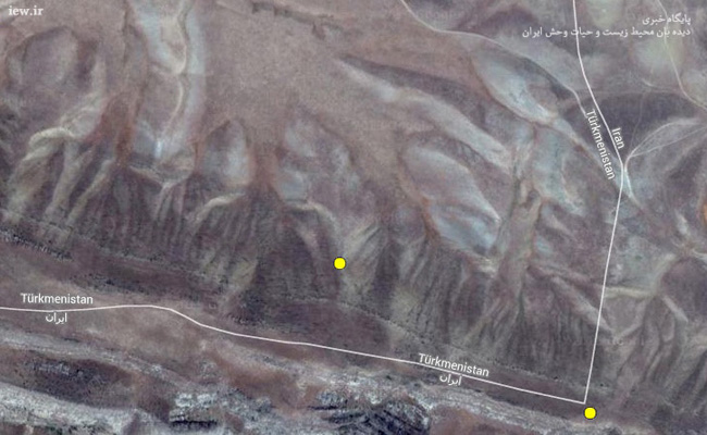 خروج پلنگ ایرانی از مرز