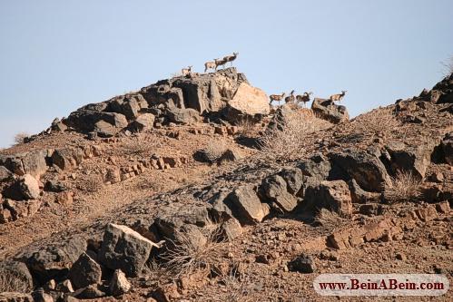 پناهگاه حیات وحش ناینبدان - محمد گائینی