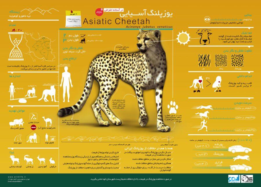 پوستر اینفوگرافیک یوزپلنگ آسیایی