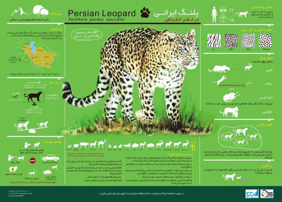 پوستر اینفوگرافیک پلنگ ایرانی